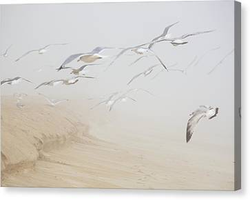 Pastel Gulls In Fog Canvas Print