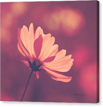 Pastel Haze Canvas Print by Georgiana Romanovna