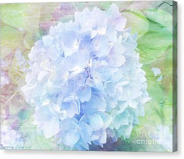 Pastel Hyacinth Canvas Print by Gena Weiser
