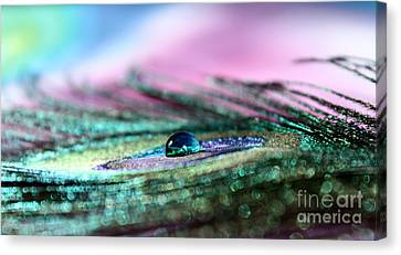 Pastel Peacock Canvas Print by Krissy Katsimbras