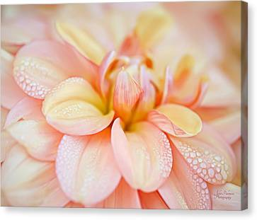 Pastel Petals And Drops Canvas Print by Julie Palencia