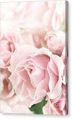 Pastel Pink Canvas Print by Stephanie Frey