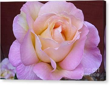 Pastel Rainbow Rose Canvas Print