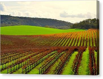 Asti Vineyards Canvas Print - Pastoral Vineyards Of Asti by Antonia Citrino