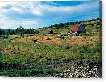 Pasture 2 Canvas Print by Terry Reynoldson