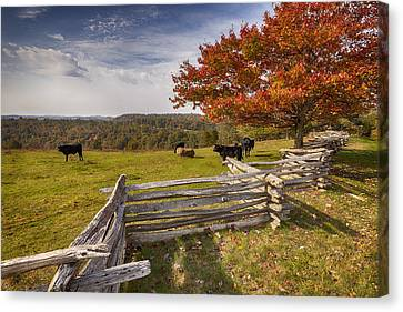 Pasture Fence Canvas Print
