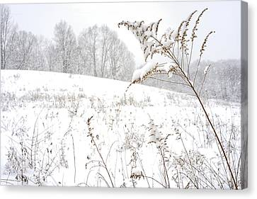 Pasture Field In Winter Canvas Print by Thomas R Fletcher