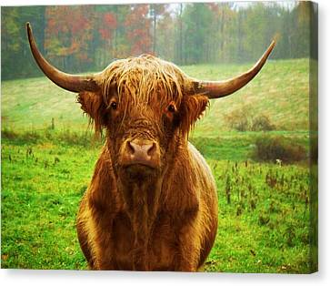 Pasture Portrait Canvas Print by Joy Nichols