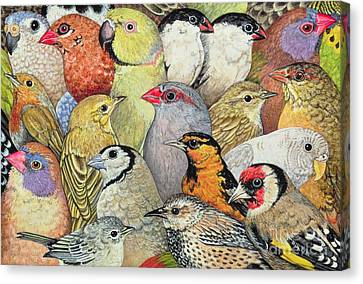 Parakeet Canvas Print - Patchwork Birds by Ditz
