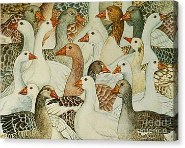 Patchwork Geese Canvas Print by Ditz