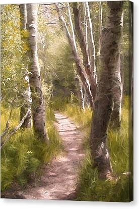Path 1 Canvas Print by Pamela Cooper