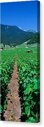 Winemaking Canvas Print - Path In A Vineyard, Valais, Switzerland by Panoramic Images