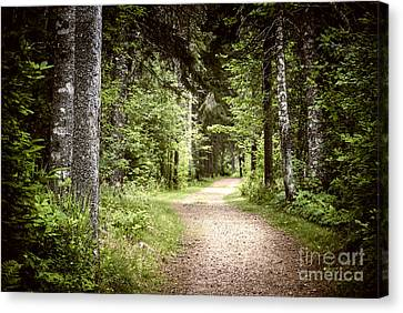 Path In Green Forest Canvas Print