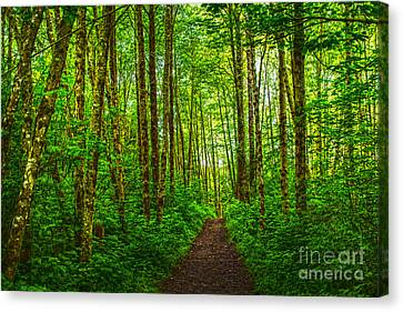 Path In Green Canvas Print