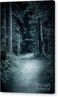 Path In Night Forest Canvas Print by Elena Elisseeva
