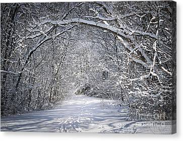 Path In Snowy Winter Forests Canvas Print by Elena Elisseeva