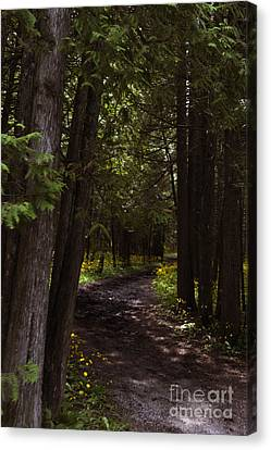 Path In The Dark Woods Canvas Print