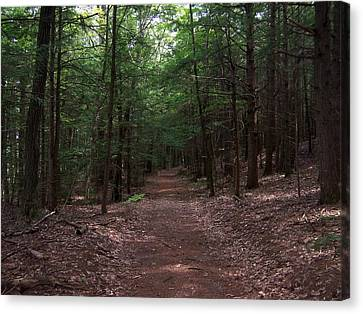 Path In The Woods Canvas Print by Catherine Gagne