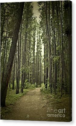 Path In The Woods Canvas Print by Ivy Ho