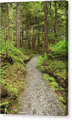 Path Inside Tongass National Forest Canvas Print by Macduff Everton
