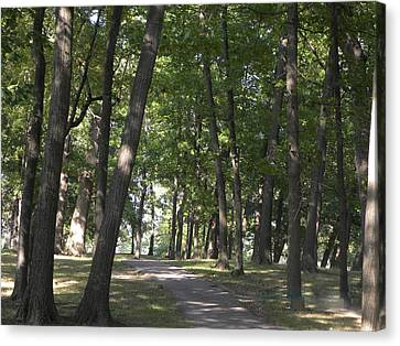 Path Into Woods Canvas Print by Cim Paddock