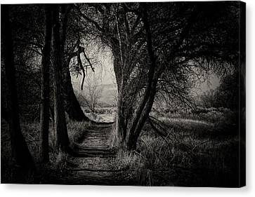 Path- Kern River Preserve Canvas Print