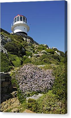 Path Leading To Lighthouse At Cape Point Canvas Print by Sami Sarkis