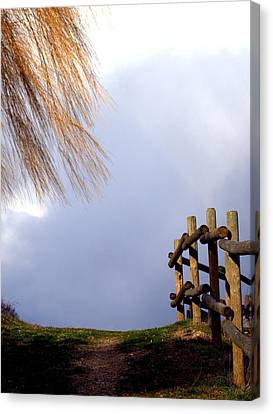 Canvas Print featuring the photograph Path by Michael Dohnalek