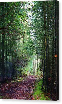 Path Of Adventure Canvas Print by Bruce Bley