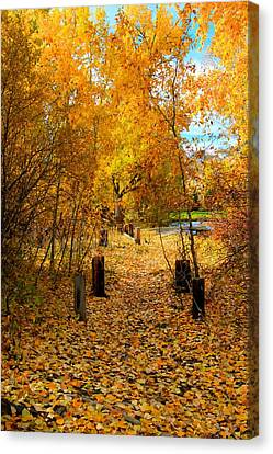 Canvas Print featuring the photograph Path Of Fall Foliage by Kevin Bone