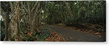 Path Passing Through A Forest, Maui Canvas Print by Panoramic Images