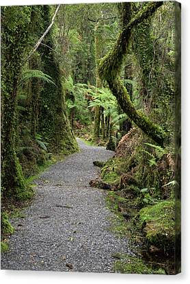 Path Passing Through Forest, Te Canvas Print by Panoramic Images