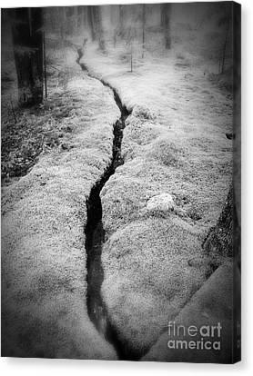 Path Taken Canvas Print by Edward Fielding
