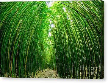 Path Through A Bamboo Forrest On Maui Hawaii Usa Canvas Print