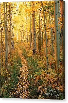 Forest Floor Canvas Print - Path Through Aspens by James Steinberg