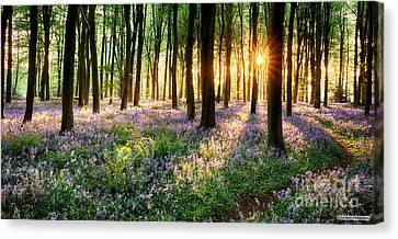 Sunrise Path Through Bluebell Woods Canvas Print by Simon Bratt Photography LRPS