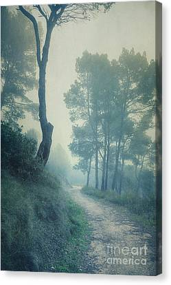 Path Through Pinewood Mist Canvas Print by Paul Grand