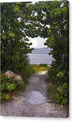 Grape Leaf Canvas Print - Path Through The Sea Grapes by Marvin Spates