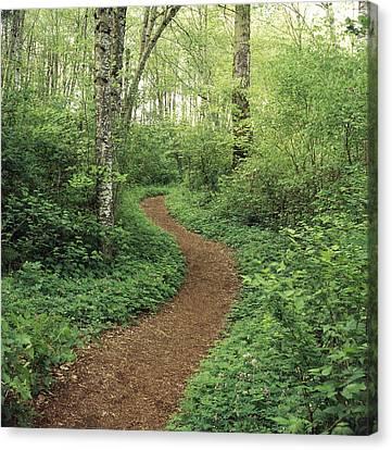 Path Through Woods Canvas Print by Bert Klassen