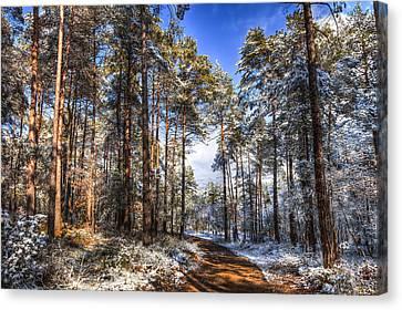 Path Throw The Snow Canvas Print by Marc Garrido