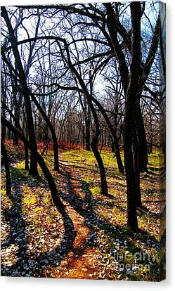 Path Thru The Oaks Canvas Print by David Taylor