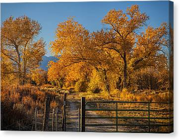 Path To Autumn Canvas Print by Andrew Soundarajan