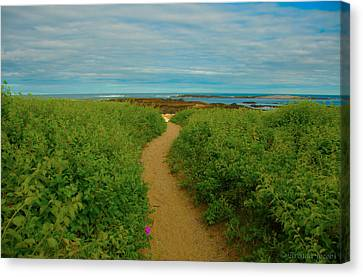 Canvas Print featuring the photograph Path To Blue by Brenda Jacobs