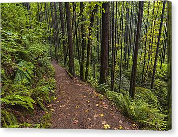 Path To Elowah Canvas Print by Mark Kiver