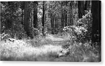 Path To The Forest Black And White Canvas Print by Dan Sproul