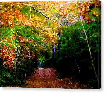 Paths We Choose Canvas Print by Karen Wiles