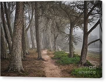 Pathway Canvas Print by Alice Cahill