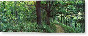 Pathway In A Forest, Mississippi River Canvas Print by Panoramic Images