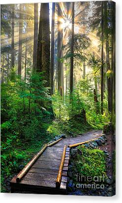 Rainforest Canvas Print - Pathway Into The Light by Inge Johnsson