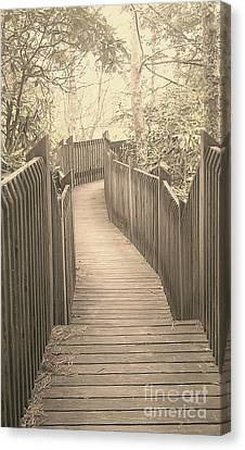 Pathway Canvas Print by Melissa Petrey